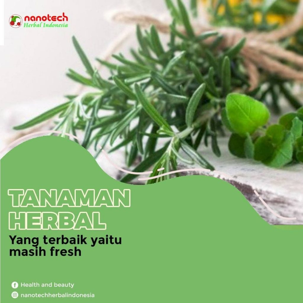 tips terapy herbal